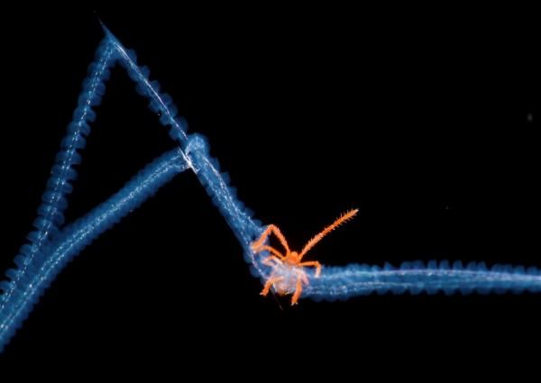 Categoría: Microimagen || Bernardo Segura - Royal Society