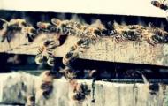 Portal 180 - La difícil convivencia entre abejas, miel y glifosato