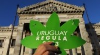 Portal 180 - La cronología de la marihuana legal