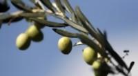 """Portal 180 - La """"estafa"""" del aceite de oliva virgen extra y cómo detectarla"""
