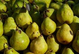 Portal 180 - Cultivo de pera se repone luego del fracaso de la cosecha de 2016