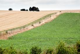 """Portal 180 - Los cultivos de soja están """"espectaculares"""""""