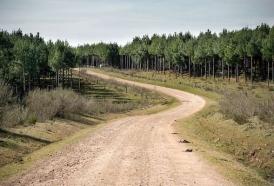Portal 180 - El área forestada de Uruguay fue de las que más aumentó desde 1990