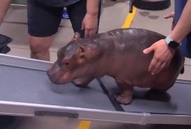 Portal 180 - Los zoológicos del mundo transforman sus animales en estrellas de internet