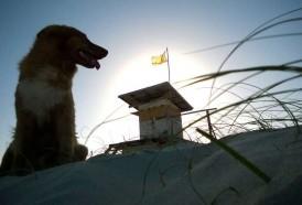 Portal 180 - Se registran casi 2.000 casos de mordidas de perro a humanos por año en Uruguay