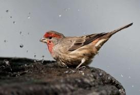 Portal 180 - Algunas aves usan colillas de cigarrillos para fumigar sus nidos
