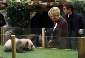 Portal 180 - Brigitte Macron bautizó al primer bebé panda de Francia