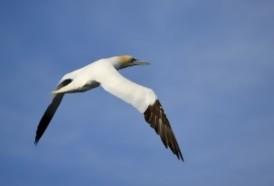 """Portal 180 - Muere en Nueva Zelanda """"el pájaro más solitario del mundo"""""""