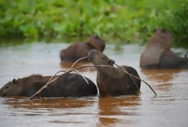 Portal 180 - El Pantanal, un tesoro amenazado en el corazón de Sudamérica