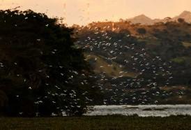 Portal 180 - La pérdida de biodiversidad en cifras
