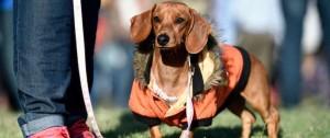 Portal 180 - A partir de octubre, perros con dueño deberán tener chip