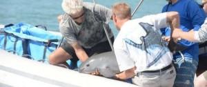 Portal 180 - México rescató una vaquita marina; quedan solo 30 ejemplares