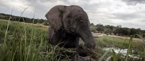 "Portal 180 - Botsuana acusa a EEUU de ""alentar"" la caza furtiva de elefantes"
