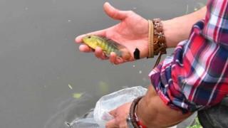 Intendencia introdujo 200 peces en el lago del Parque Rodó | 180