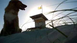 Se registran casi 2.000 casos de mordidas de perro a humanos por año en Uruguay | 180