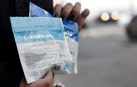 Portal 180 - Regulación quitó del mercado ilegal el doble de marihuana que incautación