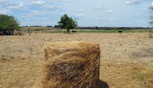 Suman otros siete departamentos a autorización de pastoreo en rutas y caminos