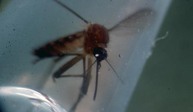 Firma francesa presenta en Guatemala la primera vacuna contra el dengue