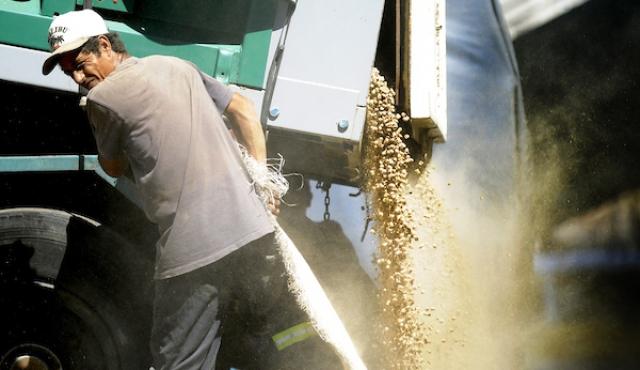 Clima provocó pérdidas en mayoría de productores sojeros