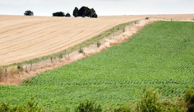 """Los cultivos de soja están """"espectaculares"""""""