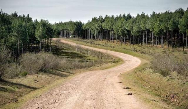 El área forestada de Uruguay fue de las que más aumentó desde 1990