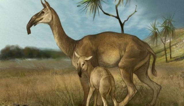 Como en Jurassic Park, científicos obtienen ADN de un extraño animal sudamericano