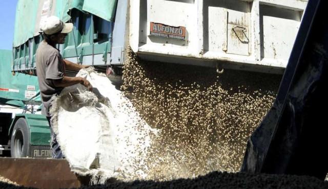 Soja: cosecha récord por debajo de las expectativas