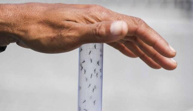 Brasil lanza millones de mosquitos con bacteria contra dengue y zika