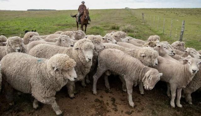 Uruguay logra habilitación para exportar carne ovina con hueso a EE.UU