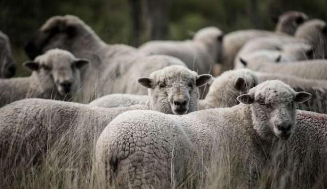 Uruguay podrá exportar carne ovina con hueso a Singapur