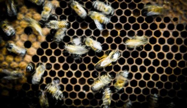 Muerte de abejas en Salto y Paysandú: apicultores apuntan a la empresa de mandarinas
