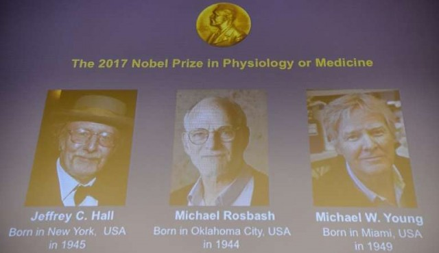 Nobel de Medicina a tres estadounidenses expertos en reloj biológico
