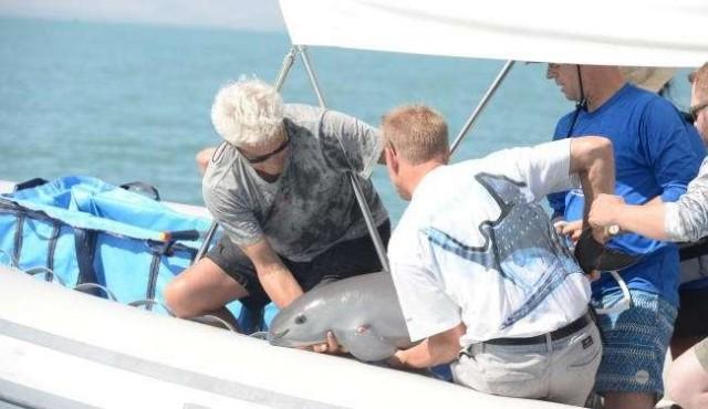 México rescató una vaquita marina; quedan solo 30 ejemplares
