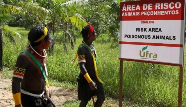 Indígenas, guardianes de bosques amenazados en Brasil