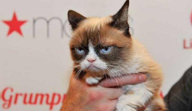 Grumpy Cat, el gato de los memes, ganó una demanda por 710.000 dólares