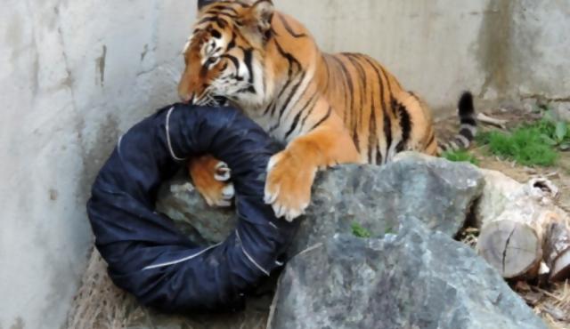 """Leones, tigres y osos """"diseñadores"""""""