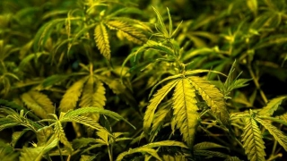 Las familias y la presión para la ley de marihuana en Argentina - Entrevistas - 1 - DelSol 99.5 FM