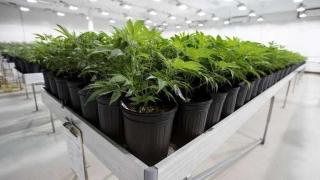 """Marihuana medicinal: """"tenemos que dar un poco más de luz"""" - Entrevistas - 1 - DelSol 99.5 FM"""