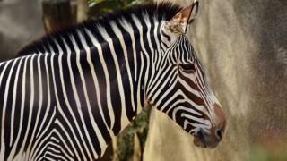 Darwin y el dilema del zoo entre la cebra macho y el dromedario hembra - Columna de Darwin - 1 - DelSol 99.5 FM