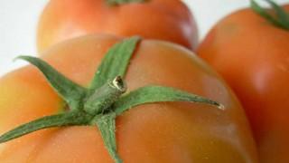 Tomate, un producto americano exportado al mundo - Dani Guasco - DelSol 99.5 FM