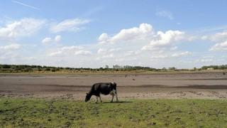 El impacto de la Niña en la soja y la ganadería - Entrevistas - DelSol 99.5 FM