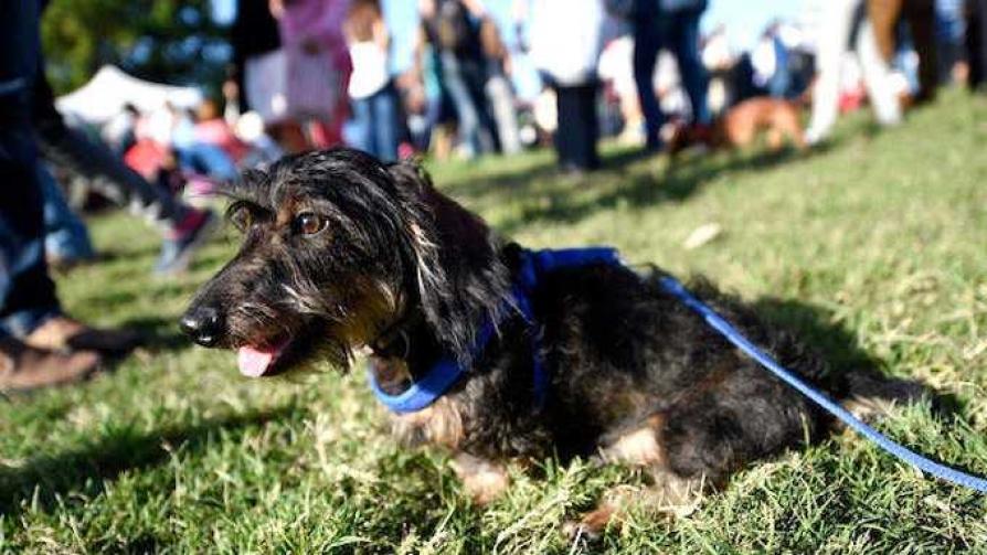 Cómo seleccionar a tu perro - El especialista - Cambio & Fuera | DelSol 99.5 FM
