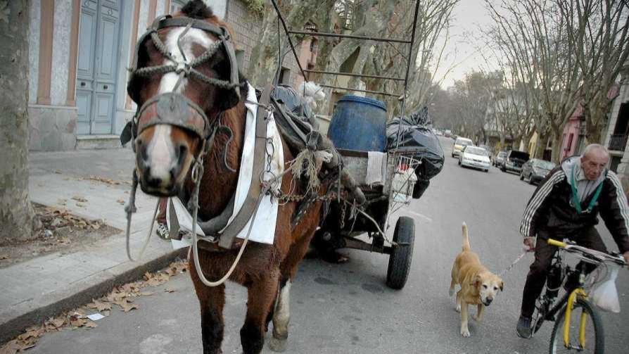 Las ideas de Darwin para adoptar los caballos de la Intendencia - Columna de Darwin - No Toquen Nada | DelSol 99.5 FM