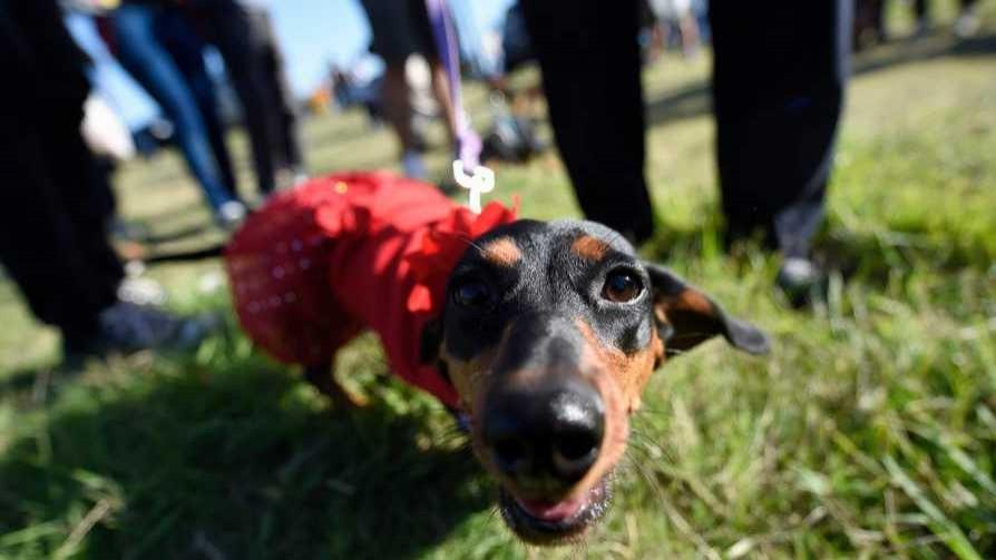 Las preguntas de Darwin sobre el chip para perros - Columna de Darwin - No Toquen Nada | DelSol 99.5 FM