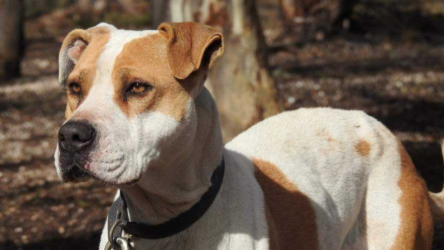 """Darwin y el """"anali"""" de los certificados para perros peligrosos - Columna de Darwin - No Toquen Nada   DelSol 99.5 FM"""