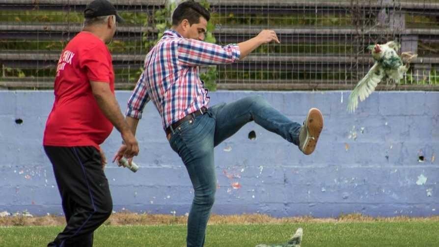 La logística para entrar a una gallina a la cancha - Darwin - Columna Deportiva - No Toquen Nada | DelSol 99.5 FM