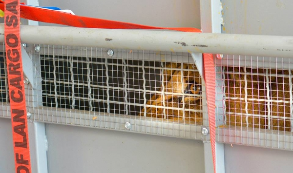 Aeropuerto de Carrasco / The Wild Animal Sanctuary