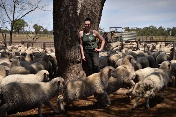 AUSTRALIA - Emma Billet, esquiladora de ovejas    AFP