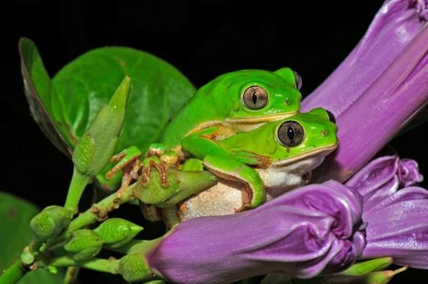 Categoría: Ecología y medio ambiente    Carlos Jared - Royal Society