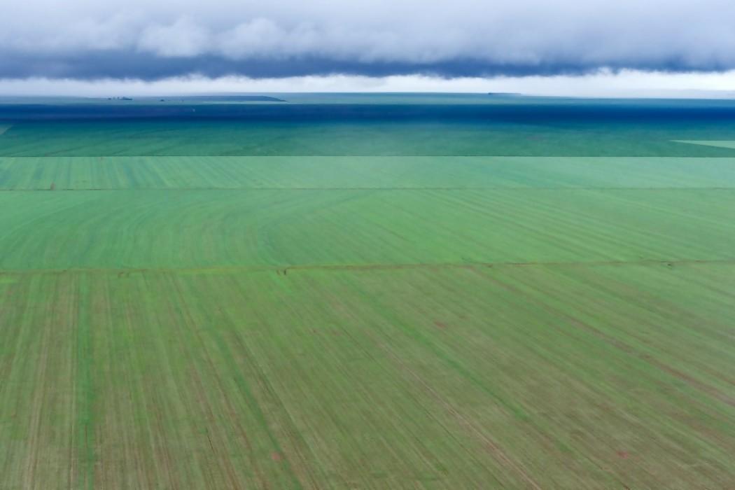 Brasil en camino a ser el campeón mundial de la soja — 180.com.uy | Del Sol 99.5 en el Mundial Rusia 2018